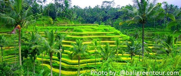 Tegalalang-Rice-Terrace-Bali-Green-Tour
